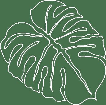 Monsterra hand drawn renee evans